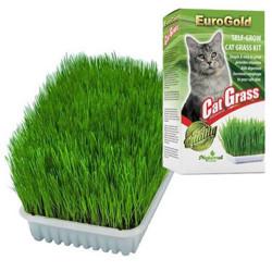 EuroGold - EuroGold Cat Grass Sindirim ve Tüy Yumağı Destekleyen Kedi Çimi
