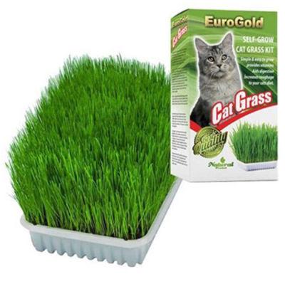 EuroGold Cat Grass Sindirim ve Tüy Yumağı Destekleyen Kedi Çimi