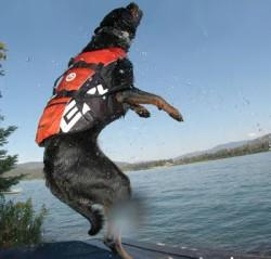 Ezydog Dog Flotation Device Red Köpek Can Yeleği XLarge - Thumbnail