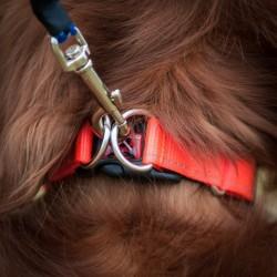 Ezydog Double Up Turuncu Köpek Boyun Tasması XLarge - Thumbnail