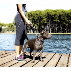 Ezydog Neo Mongrel Köpek Tutamaç Aparatı Siyah - Thumbnail