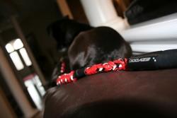 Ezydog Şok Emici Esneyebilen Mavi Köpek Uzatma Kayışı - Thumbnail