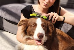 FURminator 691592 Küçük Irk Köpek Çift Taraflı Tel Fırça Başlığı - Thumbnail