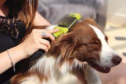 FURminator - FURminator 691592 Küçük Irk Köpek Çift Taraflı Tel Fırça Başlığı