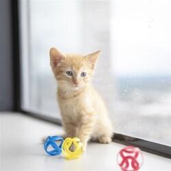 JW 32346 Cat Crazies Kedi Oyuncağı ( 3'lü Paket ) - Thumbnail