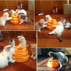 Love Pet Tower of Tracks 3 Katlı Kedi Oyuncağı - Thumbnail