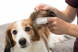 Trixie Kedi ve Köpek Kulak Temizleme Mendili - Thumbnail