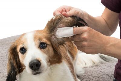 Trixie Kedi ve Köpek Kulak Temizleme Mendili