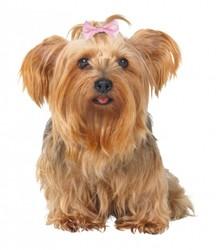 Trixie - Trixie Köpek Saç Tokası 4 - 5,5 Cm (10 Adet)