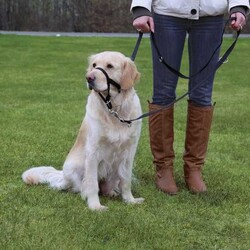 Trixie - Trixie Uzman Köpek Eğitim Tasması XL-Kısa 40 Cm