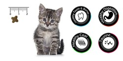 Vancat Kitten Kuzu Etli Yavru Kedi Maması 15 Kg + 10 Adet Temizlik Mendili - Thumbnail