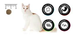 Vancat Sterilised Tavuklu Kısırlaştırılmış Yetişkin Kedi Maması 1 Kg - Thumbnail