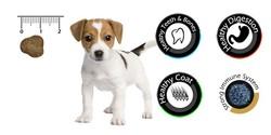Vandog Puppy Kuzu Etli ve Pirinçli Yavru Köpek Maması 15 Kg+10 Adet Temizlik Mendili - Thumbnail